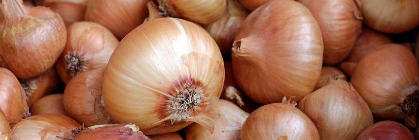 Best Onion Sites on the Dark Web